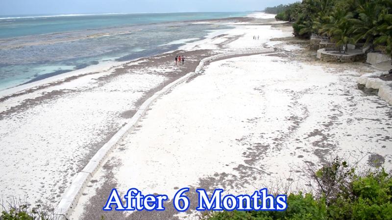 Sandsaver Beach Erosion Solution after 6 Months